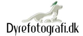 Logo Dyrefotografi
